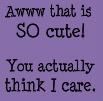 ... twilight cat ...
