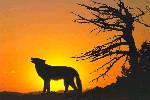 Уставший волчонок