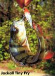 Рыбный день