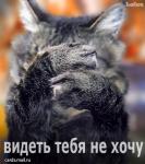 maledire gatta